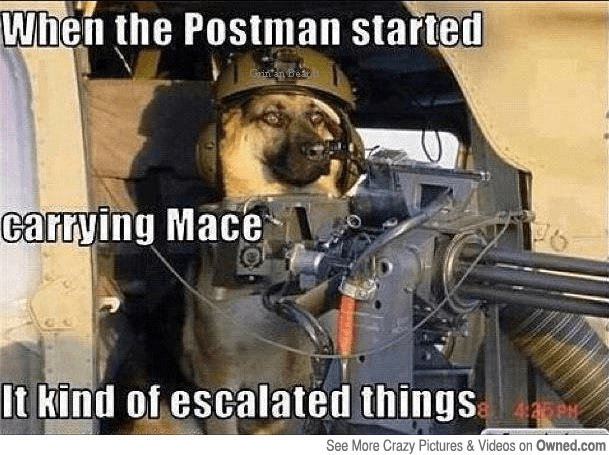 best collection of funny dog memes