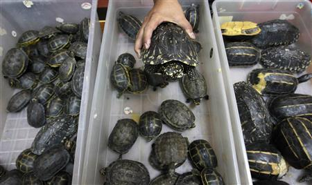 451 Turtles in a suitcase