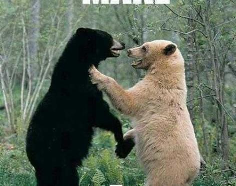 Let's make a panda meme. This panda meme explains it all!
