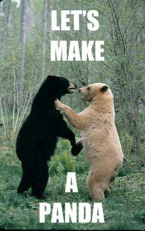 Let's make a panda meme. This panda meme explains it all!