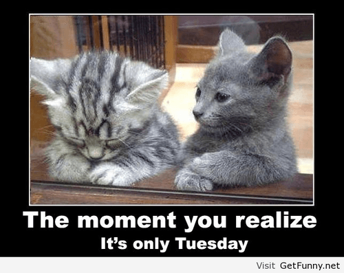 It's only Tuesday? Funny meme of the day for Tuesday