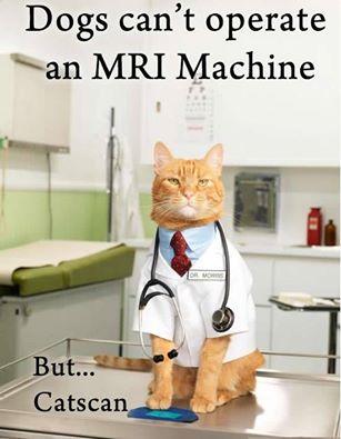 Crap Cat Joke Of The Day – Jokes at Slapwank