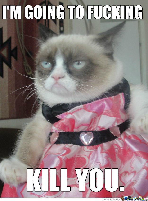 Funny Cat Halloween memes