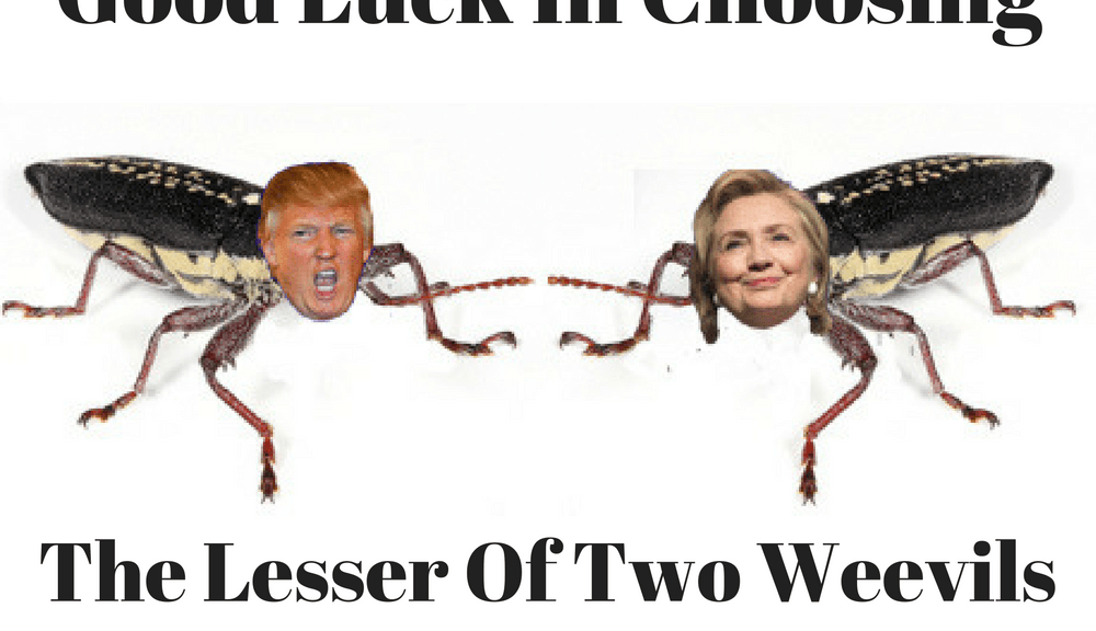 The lesser of two weevils - Clinton v Trump