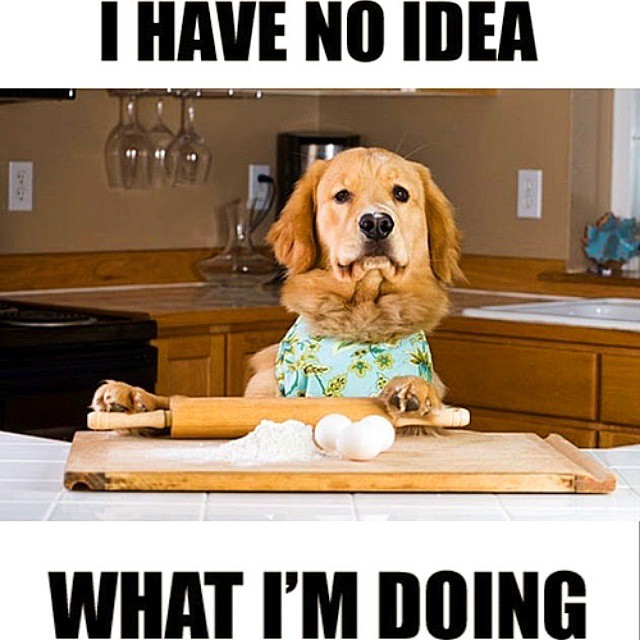Funny Cooking Memes with a cute dog