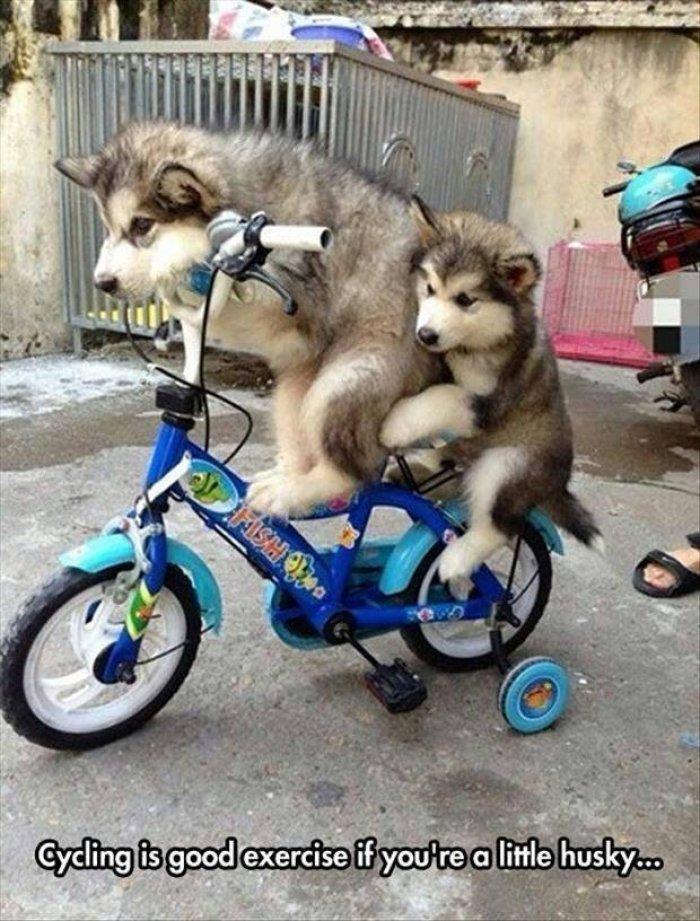 Funny Cycling Memes