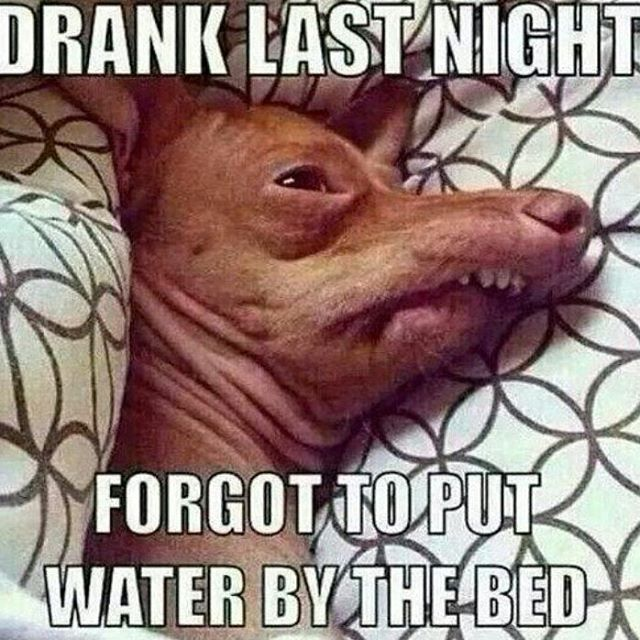 Funny Drinking Memes – The Best Drinking Memes Online