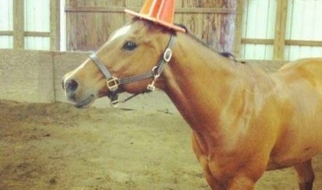 Funny Horse Memes - Check out these funny horse memes