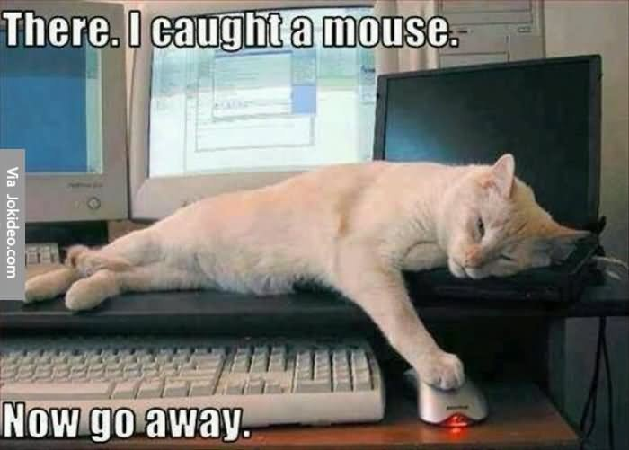 Funny Lazy Memes with cat
