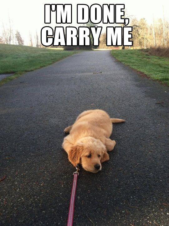 Lazy Meme with a dog
