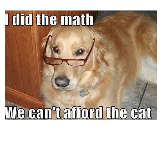 Dog Meme about cat
