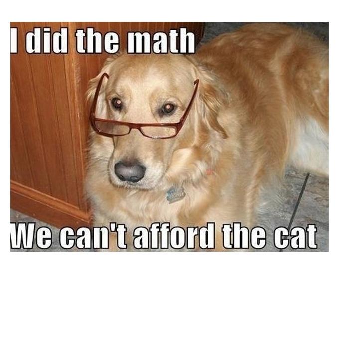 Dog Meme about cat