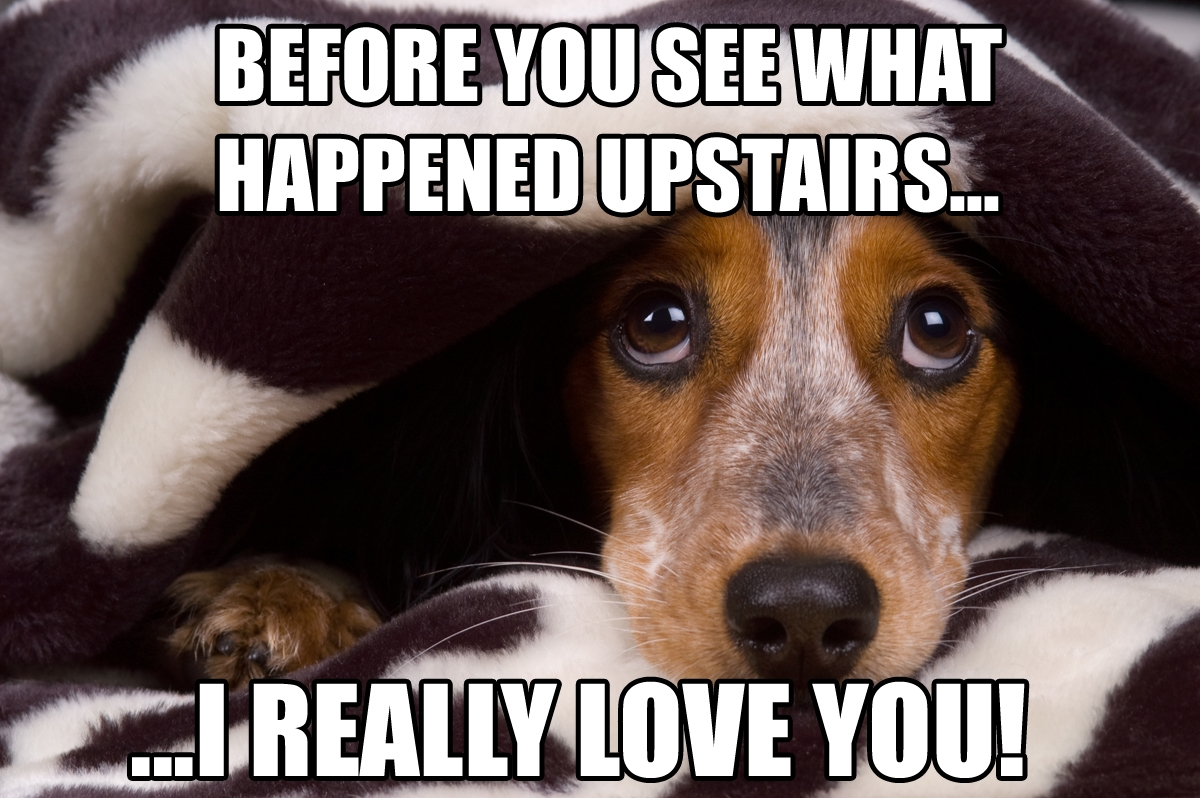 Funny Dog Memes with hiding dogs