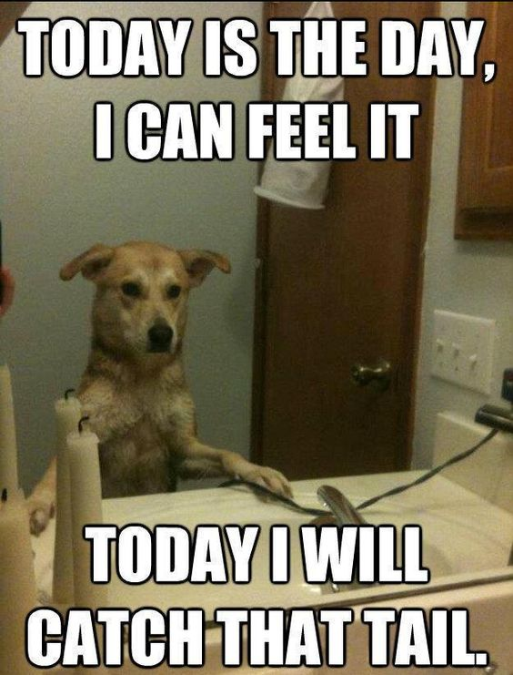 Funny Dog Memes about tail