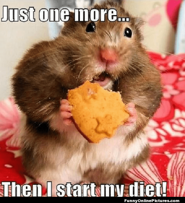 Funny hamster memes - I don't want to diet!