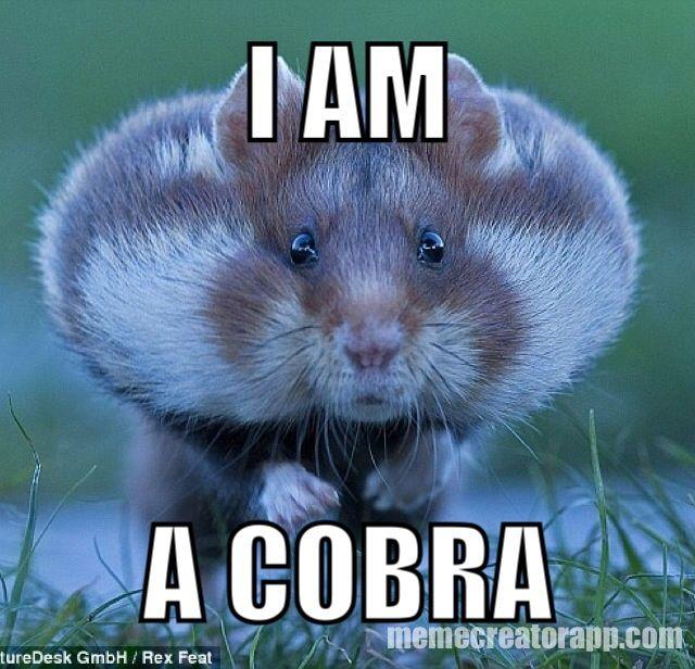 Funny hamster memes -I am a cobra