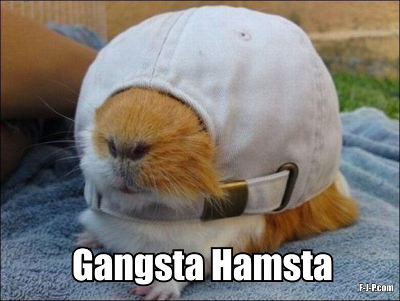 Funny hamster memes - I'm a gangsta hamster