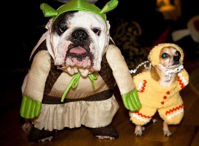 Funny Bulldog – The Funniest Bulldog Videos and Memes