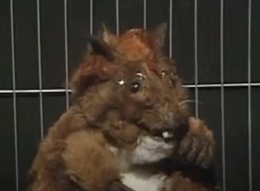 Vyvyan's hamster SPG