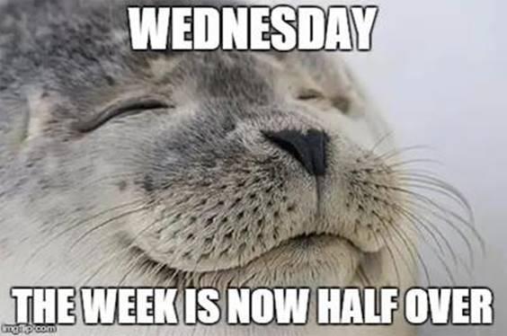 hump day meme
