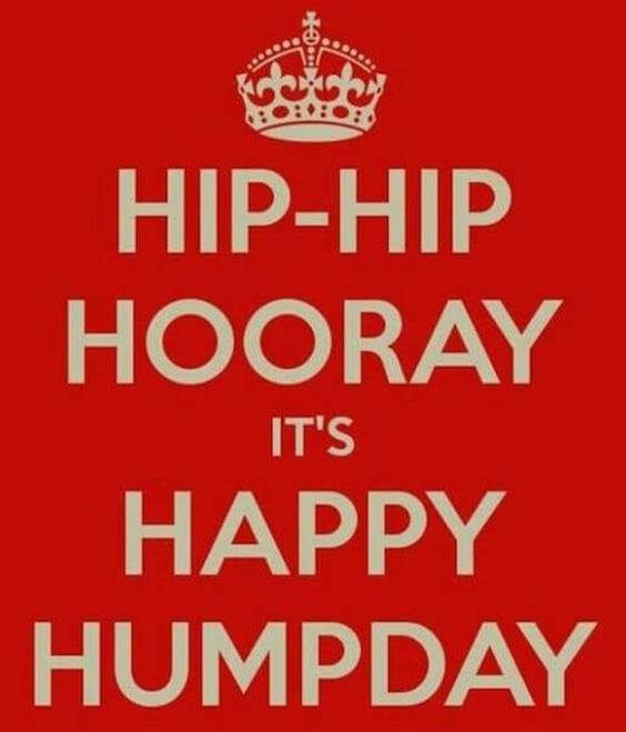 hilarious hump day
